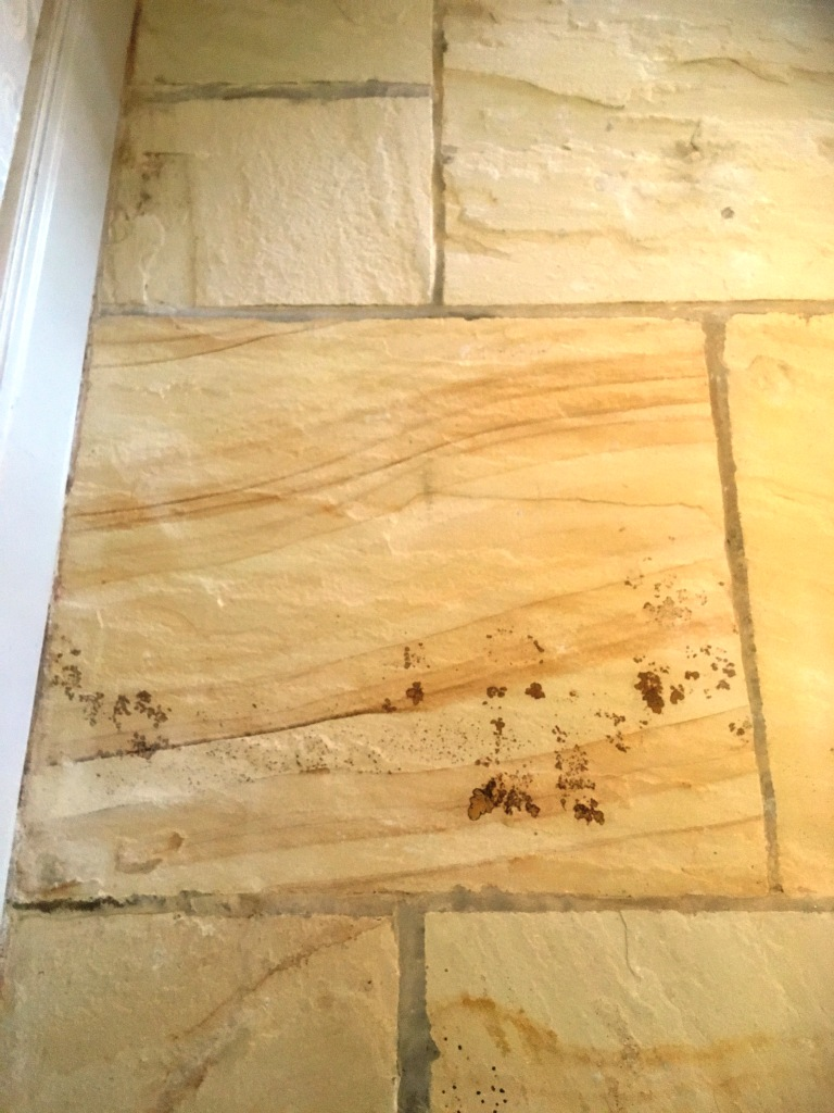 Large Sandstone Floor After Cleaning Showing Fosils Disley